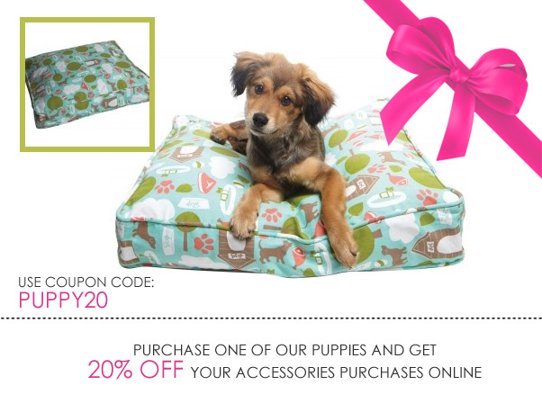 Doggie Boutique apparel, Beds, Bowls, Toys, Treats and  More